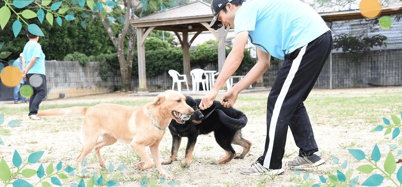 滋賀山本家庭犬警察犬訓練所