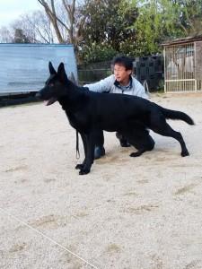 IMG_20160412_175625 ウテの交配犬